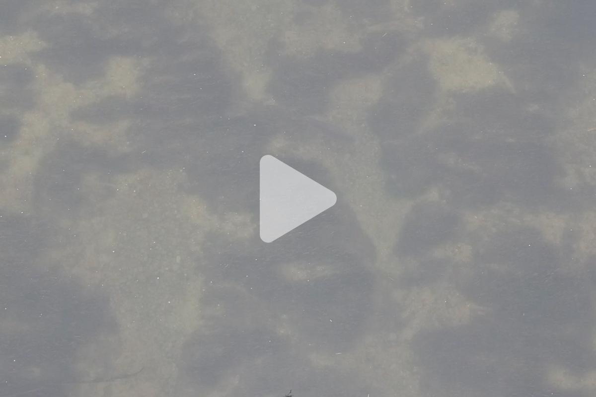 twelvefeet ausgabe18 david 30 - Flusskarpfen stalken