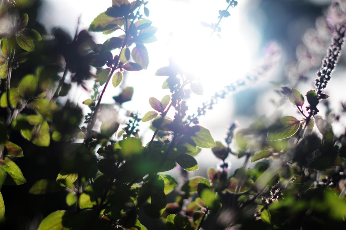 blumen - Herbst?