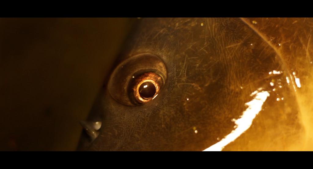 Screen9 1024x553 -  - Moments of Adrenalin, High Quality, Film, DVD, Carp fin