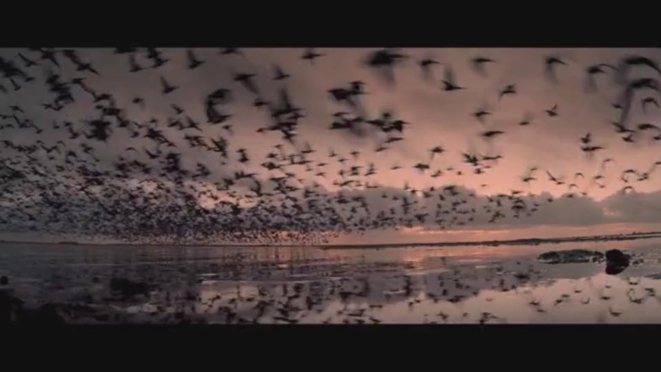 wild2 -  - tiere, natur, Impressionen, hammer, glatte 1, Film, de nieuwe wildernis