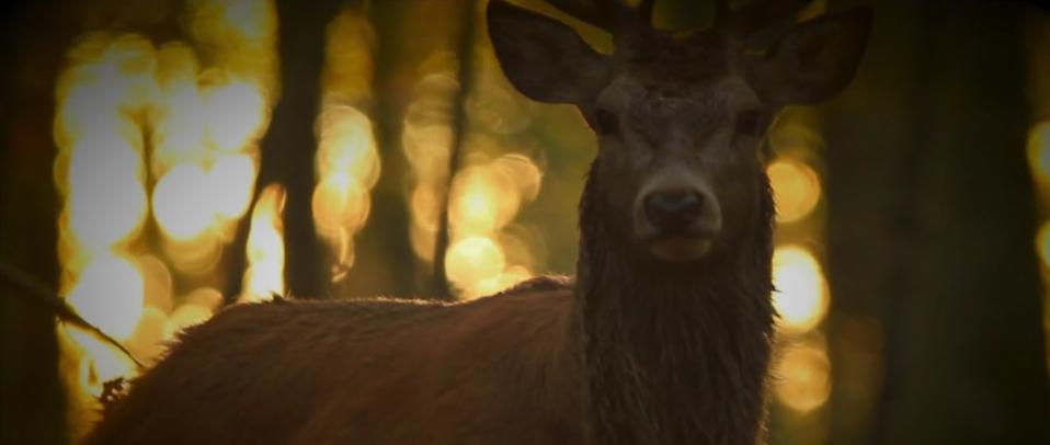 Bildschirmfoto 2015 11 15 um 14.51.26 -  - twelve ft., natur, Hinter den Kulissen, Frank Pizon, Behind the Scenes, Atemberaubend großartig.