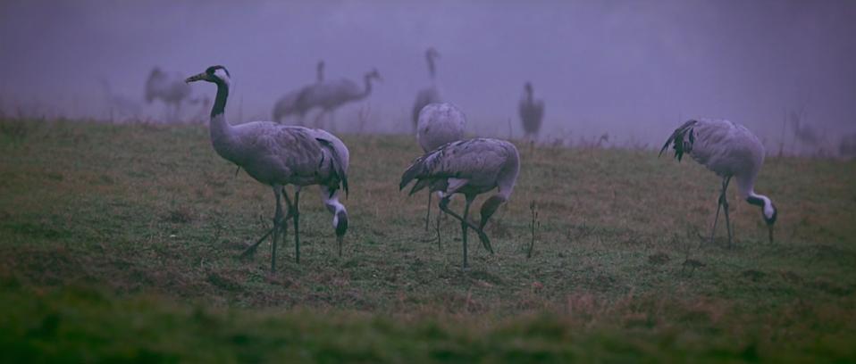 Bildschirmfoto 2015 11 15 um 14.52.35 -  - twelve ft., natur, Hinter den Kulissen, Frank Pizon, Behind the Scenes, Atemberaubend großartig.
