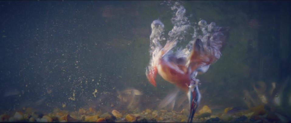 Bildschirmfoto 2015 11 15 um 14.53.00 -  - twelve ft., natur, Hinter den Kulissen, Frank Pizon, Behind the Scenes, Atemberaubend großartig.