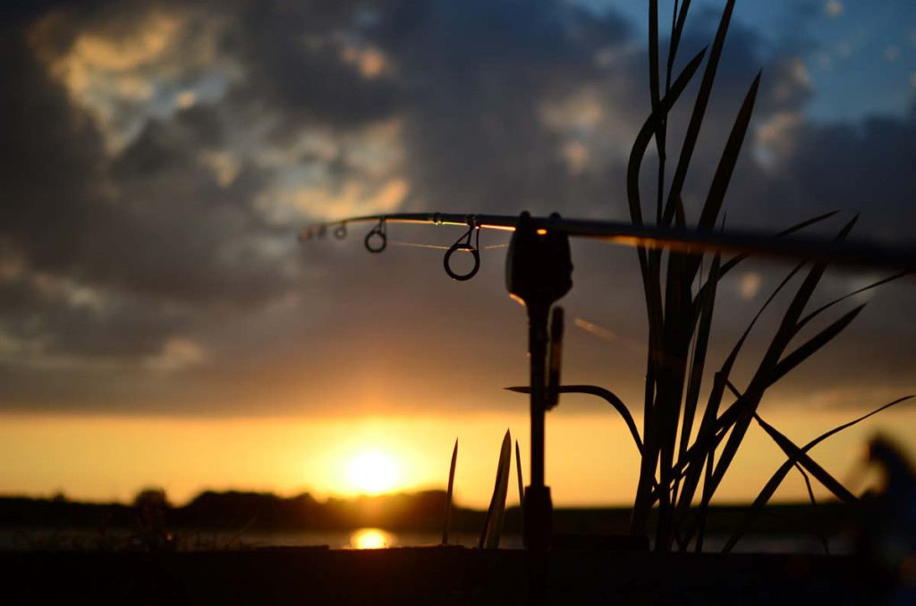 Bild6 1024x678 -  - Zielfisch, Vampire Baits, Urlaub, Karpfenangeln in Frankreich, Jahresziel, Graskarpfen, Grasfische, Graser, frankreich, Flachlandseen, erfolg, Christian Unbereit