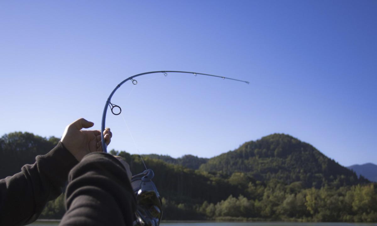 20170125 Bildschirmfoto 2017 01 25 um 20.28.45 -  - Rod, parabolische Aktion, New, Curvex, Carp Fishing, Avid Carp, avid