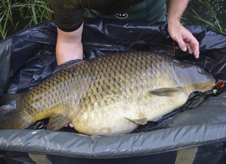 Titel fichgewicht 770x560 - 5 Angler - 5 Meinungen // Die Jagd nach Fischgewicht!