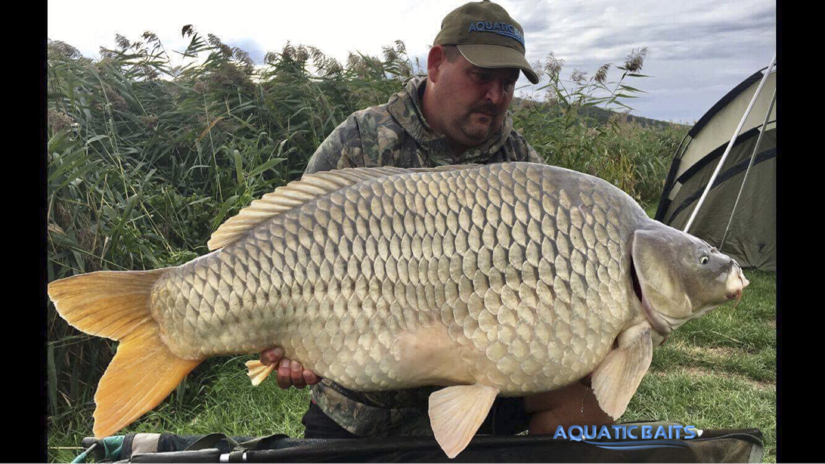 20170925 Ganselmayer 28kg -  - Thomas Ganselmayer, Siegfried Barton, Mathias Pokorny, Aquatic Baits