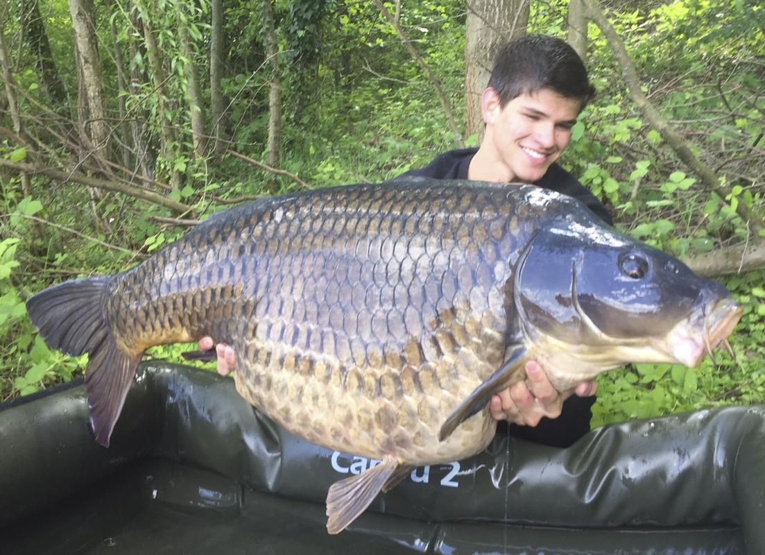 11 -  - Großkarpfen, Frank Schmidt, Fangrausch, Dickfisch, anaconda, 30 Kilo