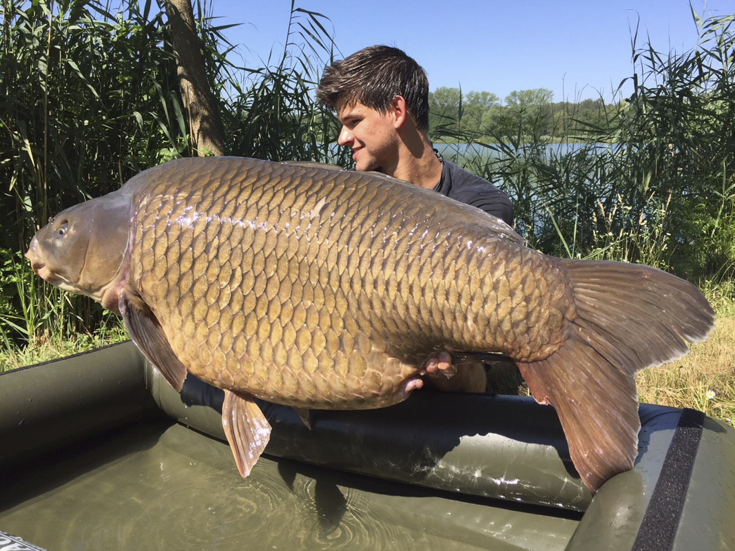 9 -  - Großkarpfen, Frank Schmidt, Fangrausch, Dickfisch, anaconda, 30 Kilo
