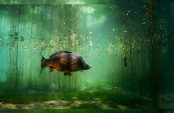 Titelbild Karpfen 570x370 - Du denkst du bist ein guter Angler? - Weißt du wirklich alles?