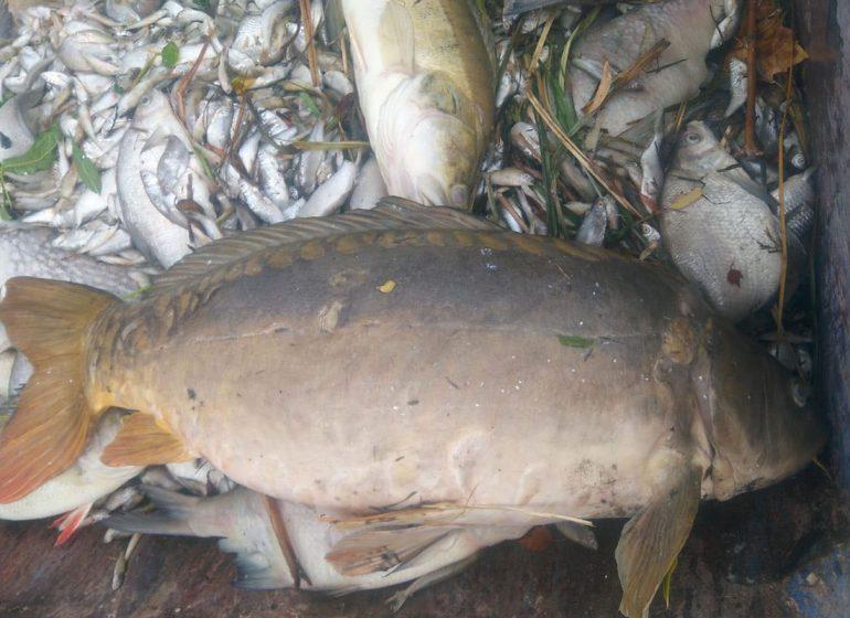 Aasee Muenster7 770x560 - Das Aasee-Fischsterben – Überall tote Fische?