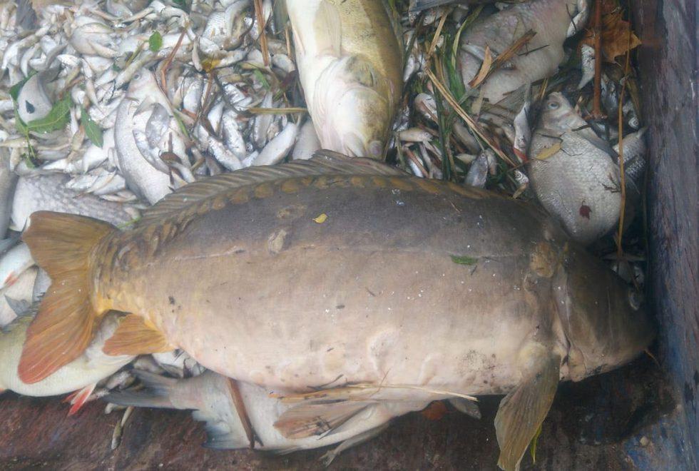 Aasee Muenster7 980x660 - Das Aasee-Fischsterben – Überall tote Fische?