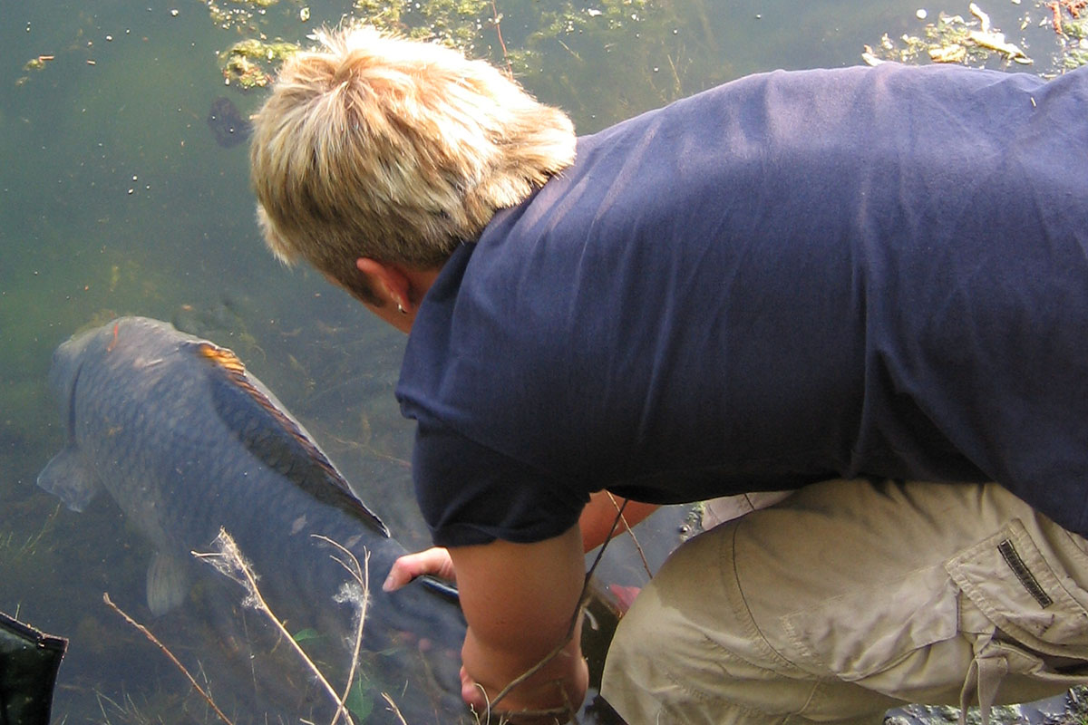IMG 0243 -  - Zielfisch, karpfenangeln
