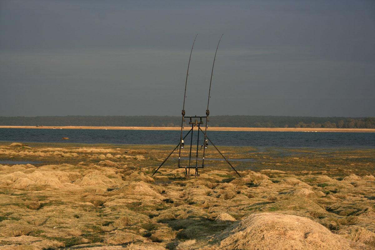 IMG 0954 -  - Zielfisch, karpfenangeln