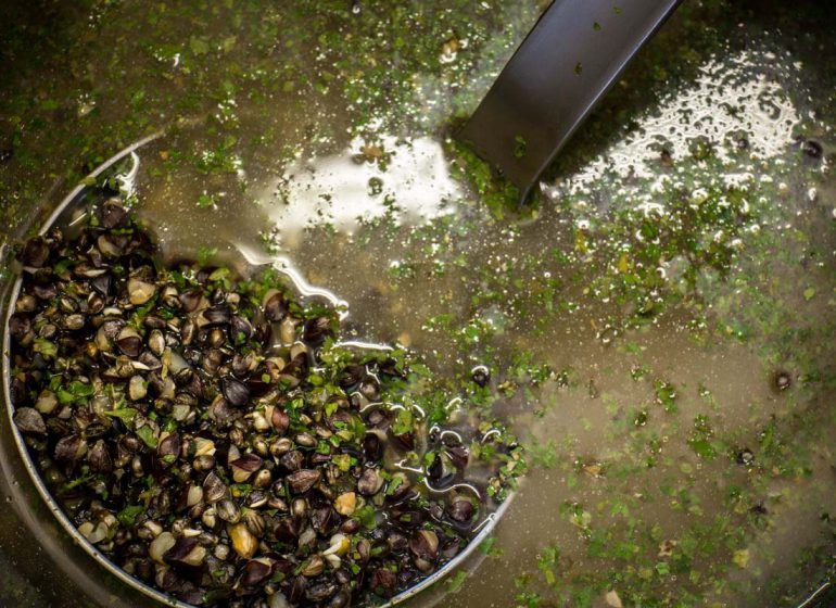 twelveft greenlipped mussel monster1 770x560 - So kommt GLM in Hanf & Co.