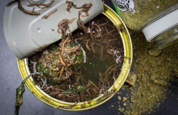 twelveft mybaits bloodworm boiliedip3 570x370 - Freshes Bundle für Fans von Hookbait-Tuning