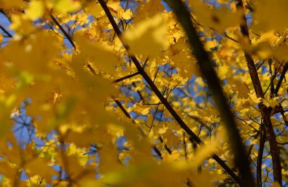 twelvefeetmag Herbst Karpfenangeln 570x370 - Die 5 beliebtesten Beiträge im September