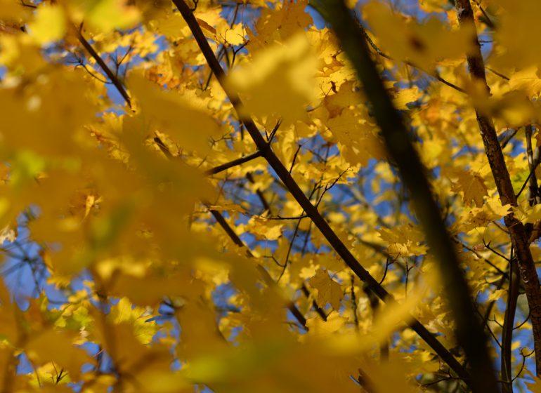 twelvefeetmag Herbst Karpfenangeln 770x560 - Die 5 beliebtesten Beiträge im September