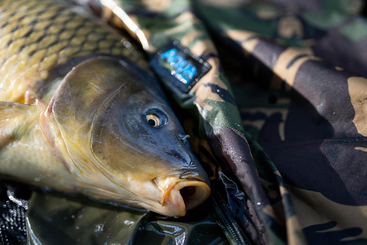twelvefeetmag Marvin Glinka Wunderkoeder 2 -  - 5 Angler - 5 Meinungen
