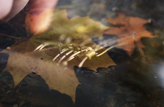 twelvefeetmag karpfen im november 570x370 - Karpfenangeln im November – die besten Beiträge