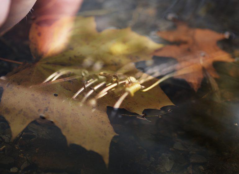 twelvefeetmag karpfen im november 770x560 - Karpfenangeln im November – die besten Beiträge