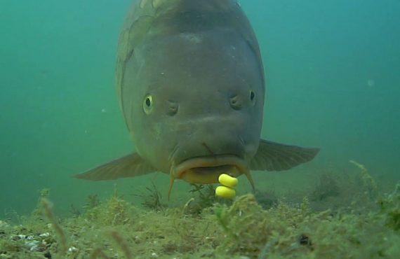 Wissen was am Spot geht – Unterwasserkamera