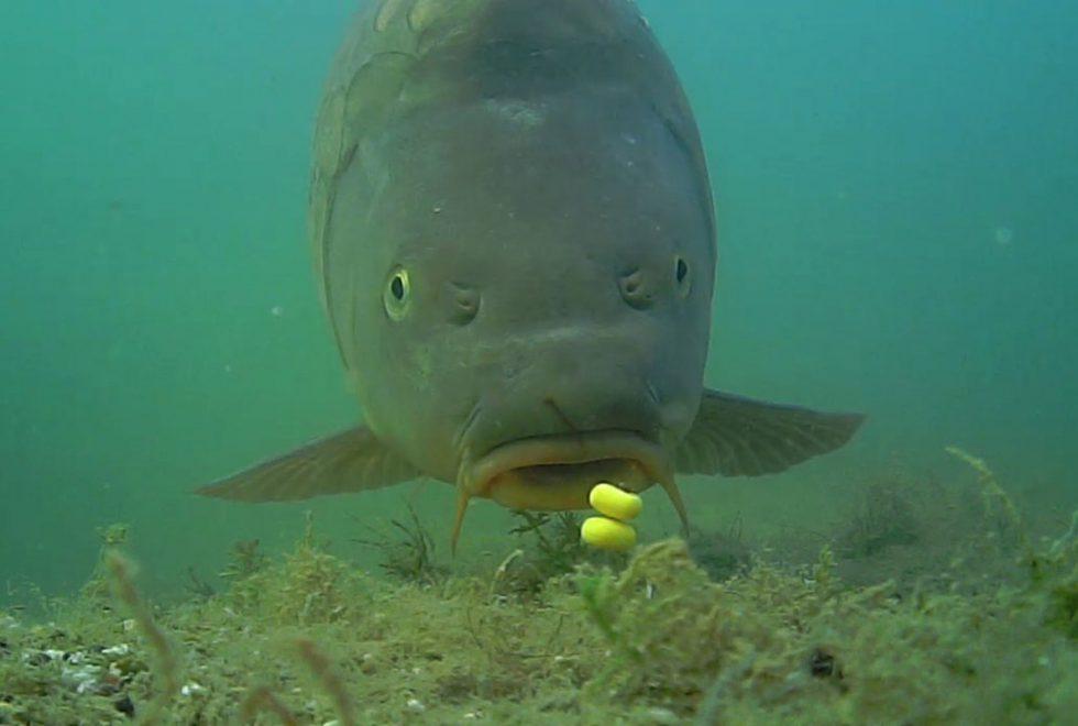twelvefeetmag waterwolf unterwasserkamera 980x660 - Wissen was am Spot geht – Unterwasserkamera