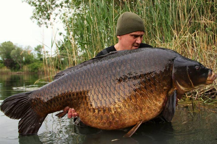 twelvefeetmag mehr als 30 kilo 9 -  - 30 Kilo Karpfen, 30 Kilo, 30 Kg