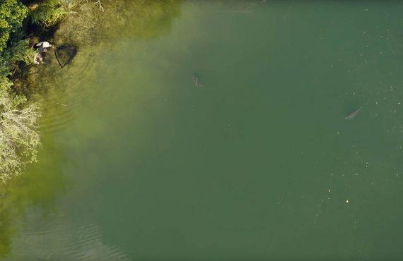Karpfen an der Oberfläche – Shorty mit Mathias Birkle