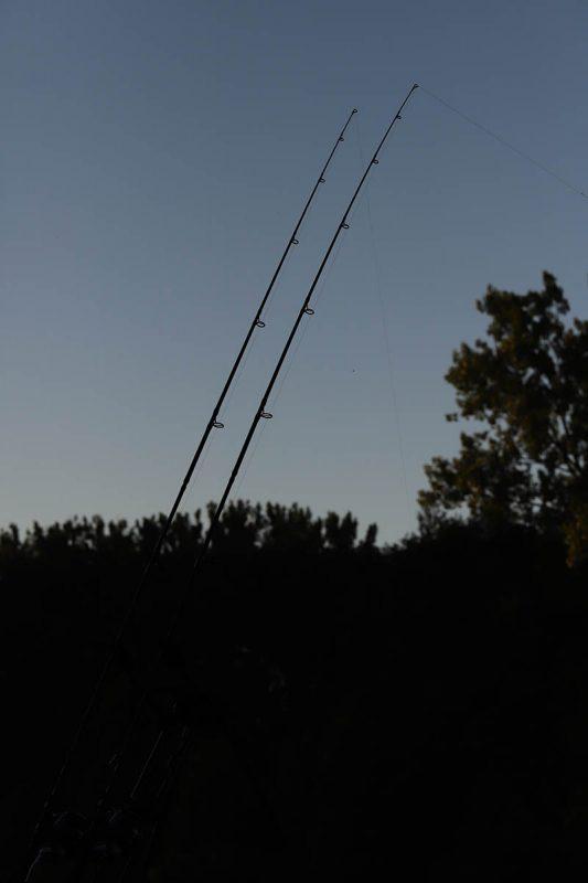 twelvefeetmag Karpfenangeln am Fluss 6 533x800 -  - Philipp Resch, Main, Karpfenangeln am Fluss, Carpfishing River, angeln