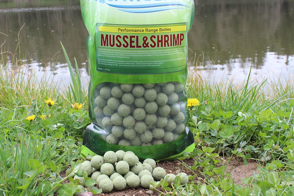 twelvefeetmag aquatic baits mussel squid 1 -  - Shrimp, Mussel, boilies, Aquatic Baits