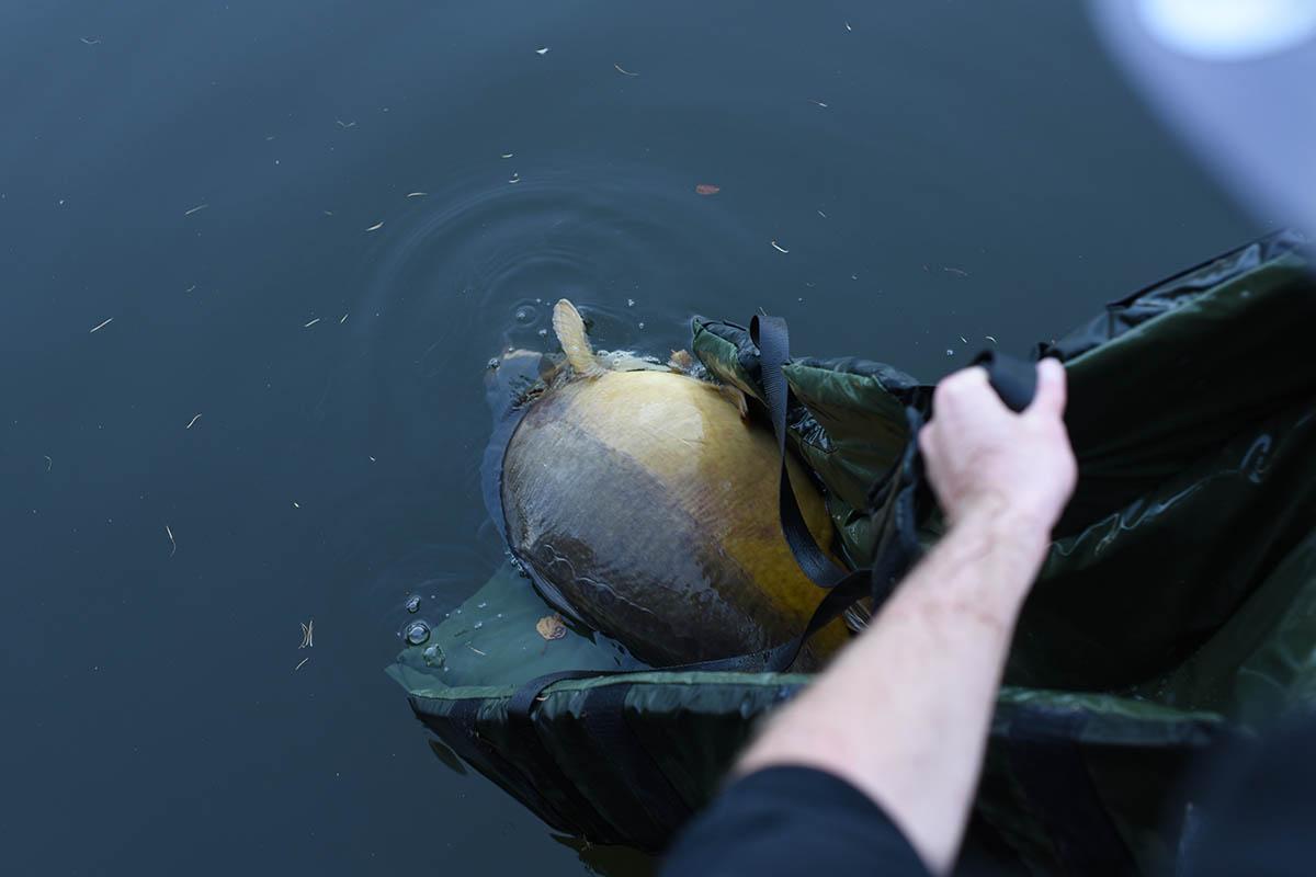 twelvefeetmag karpfenangeln im fruehling 8 -  - Karpfenangeln im Frühling, Karpfen angeln, Frühjahr, fischen, Felix Kaczmarek