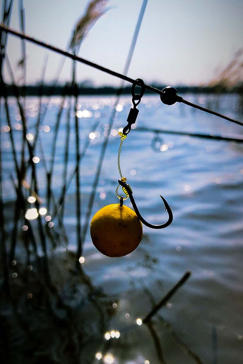 twelvefeetmag kai kusmenko karpfenangeln short report 3 -  - Karpfenangeln im Frühjahr