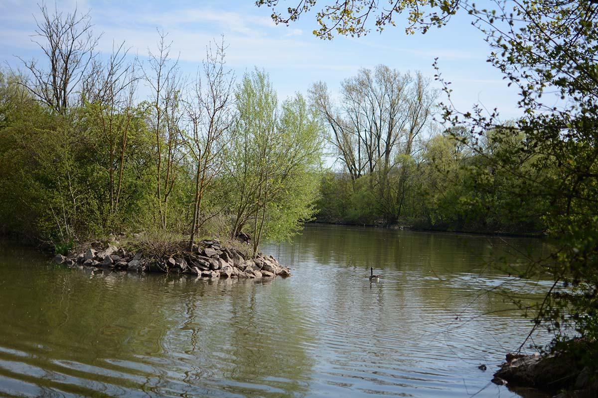 twelvefeetmag flusskarpfen zur laichzeit 7 -  - Laichzeit, Karpfenangeln in der Laichzeit, Flusskarpfen in der Laichzeit