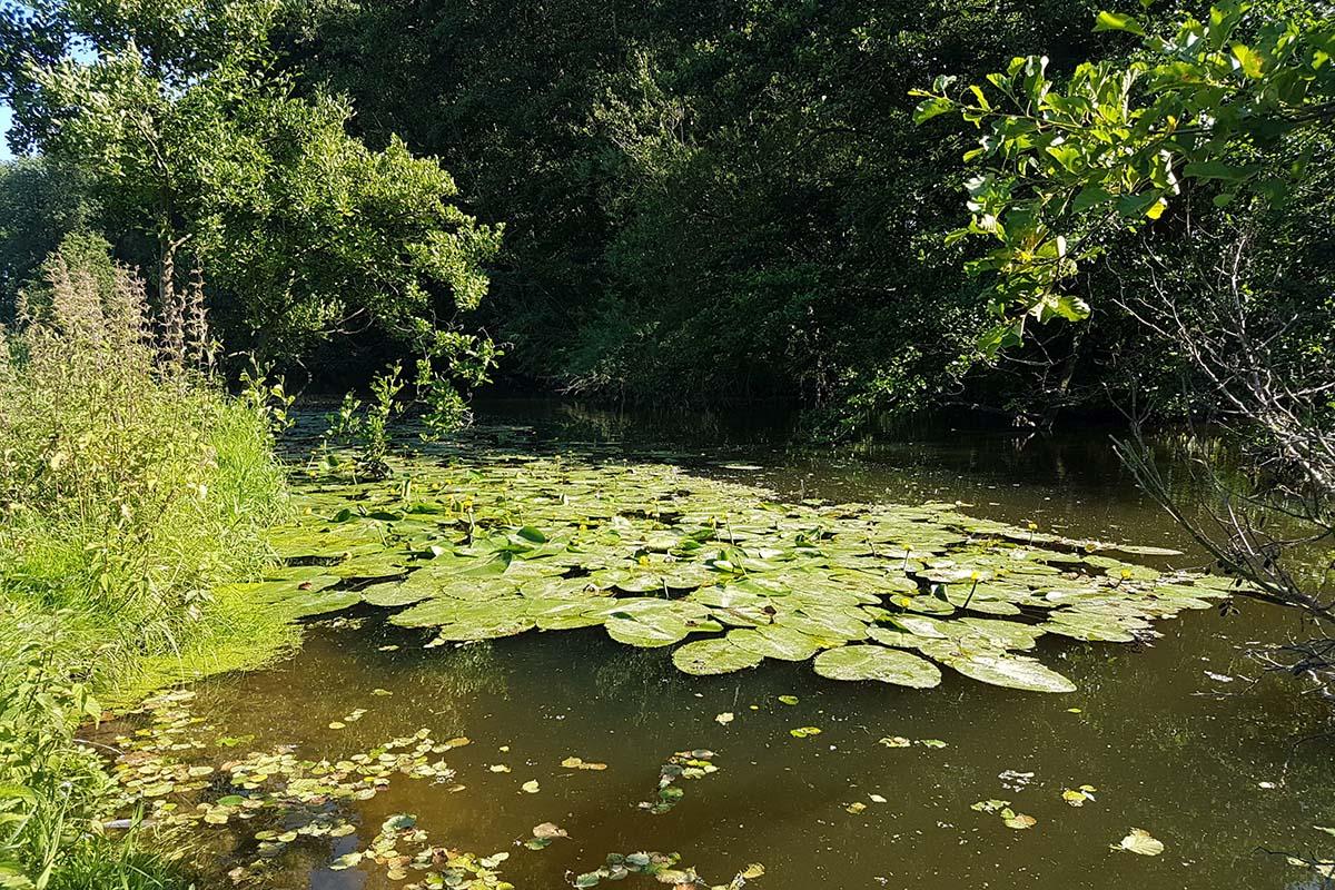 twelvefeetmag attraktive plätze in kleinen flüssen 2 -  - Kleine Flüsse zum karpfenangeln, Karpfenangeln an kleinen Flüsse, Attraktive Platze an kleinen Flüssen