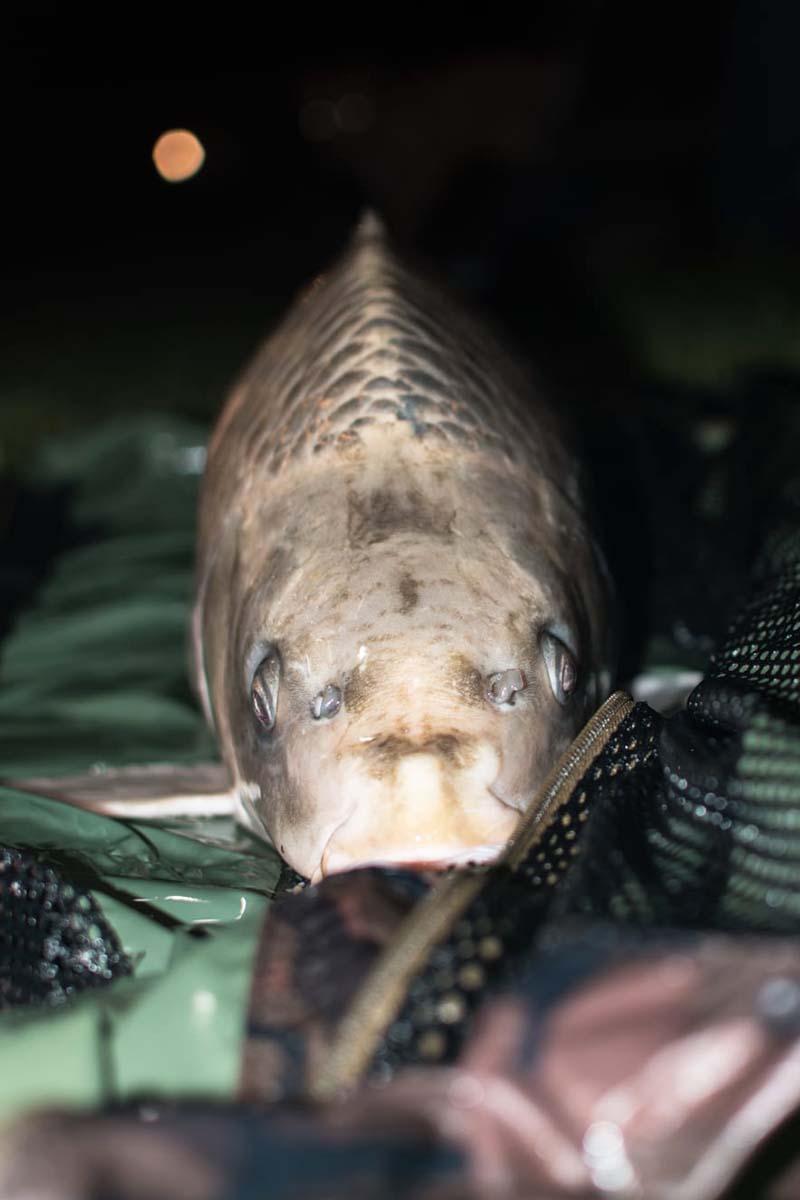 twelvefeetmag my baits michiurbanfishing 1 -  - My Baits, Michi Aveiro, Ghosty