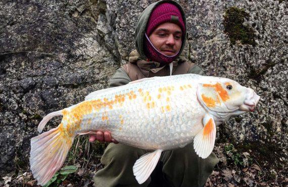 5 Fische, bei denen das Gewicht egal ist
