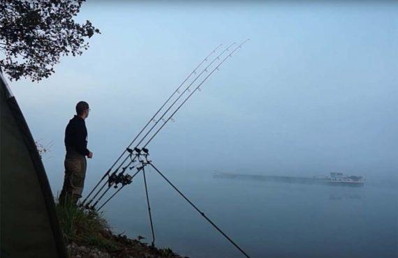 Karpfenangeln in der Donau – Neues Video online!
