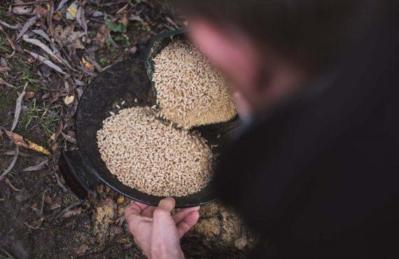 Karpfenangeln mit Maden – Klaus Wegmann zeigt, wie´s geht