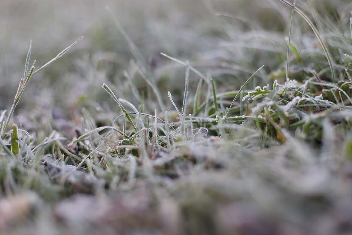 twelvefeetmag karpfenangeln im dezember 9 -  - winterkarpfen, Social, Karpfenangeln Winter, Karpfenangeln im Dezember