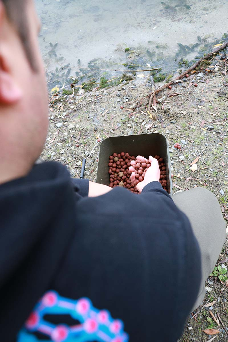 twelvefeetmag karpfenangeln futtermenge 7 -  - Karpfenangeln mit Futter, Füttern