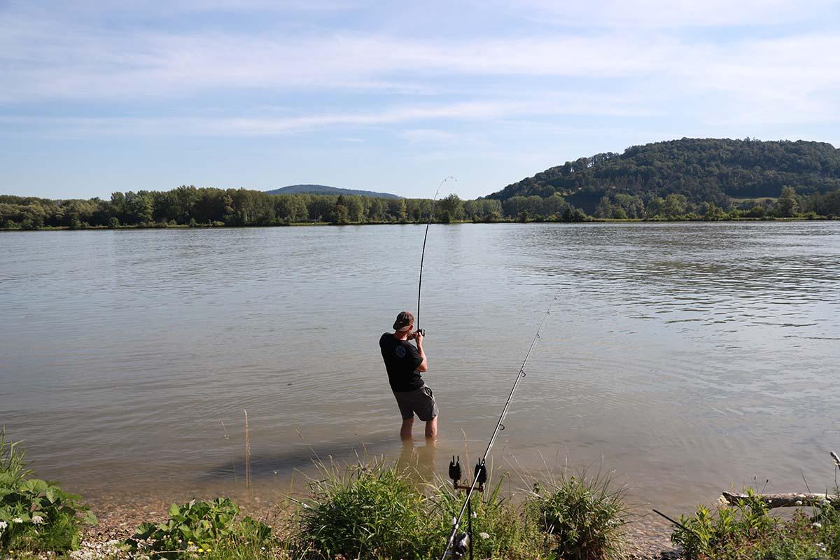 twelvefeetmag karpfenangeln an der donau 1 -  - Karpfenangeln in der Donau, Karpfenangeln an großen Flüssen, Karpfenangeln am Fluss, Flussangeln auf Karpfen