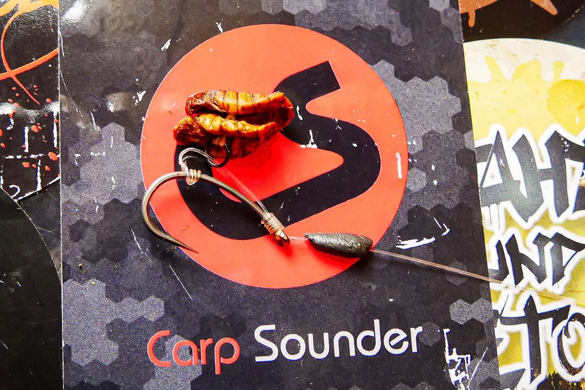 twelvefeetmag karpfenangeln seidenraupen 1 -  - Seidenraupen, Karpfenangeln Seidenraupen, Karpfenangeln mit Seidenraupen