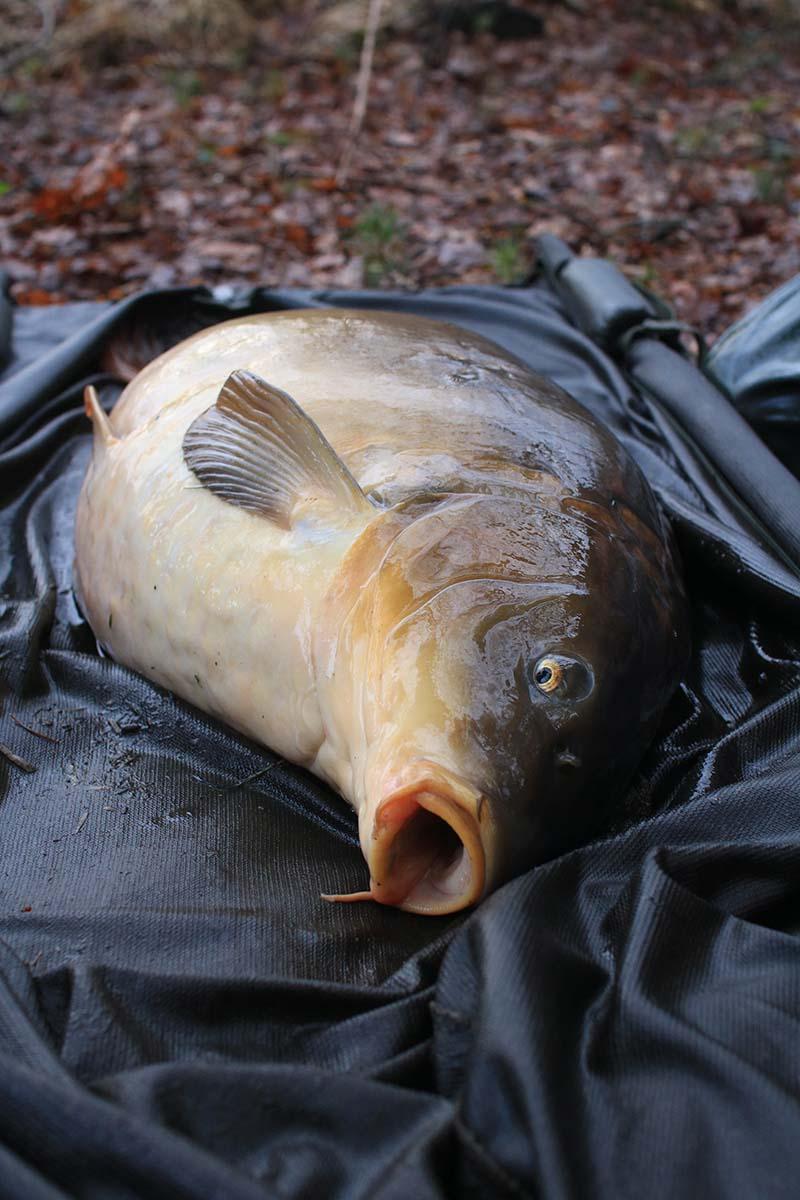 twelvefeetmag zielfischjagd beim karpfenangeln dave woods 3 -  - Zielfischjagd, Zielfisch
