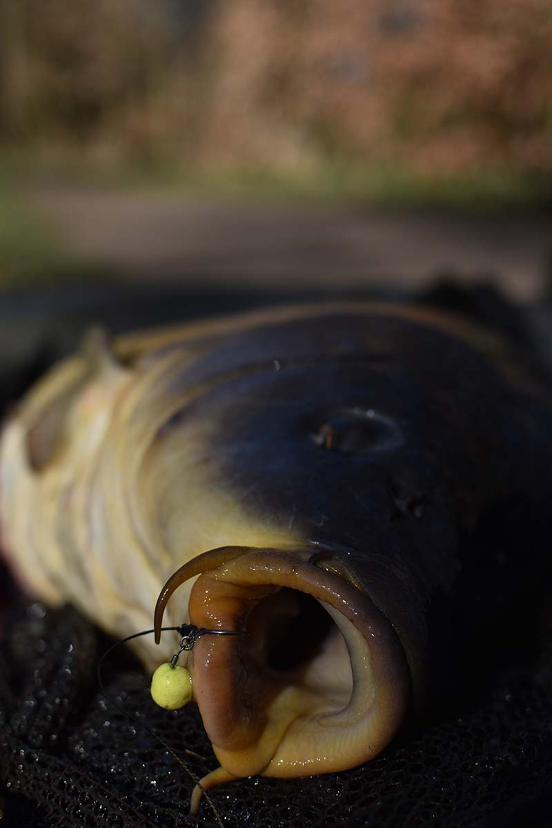 twelvefeetmag karpfenangeln im april bait bag 3 -  - Köder für Frühjahr, Karpfenköder im Frühjahr, Karpfenangeln im Frühjahr, Karpfenangeln im April