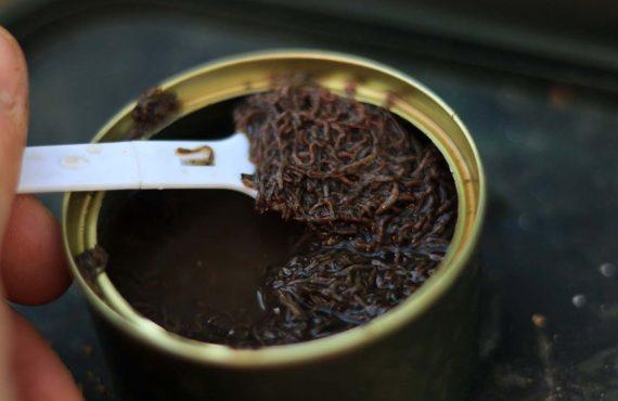 Karpfenangeln mit Zuckmückenlarven – Patrick Krenn