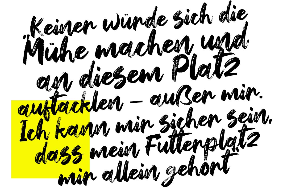 twelvefeet stories 2021 marcfaehrnich1 -  - Zielfischjagd, Zielfischangeln, Zielfisch, Marc Fähnrich