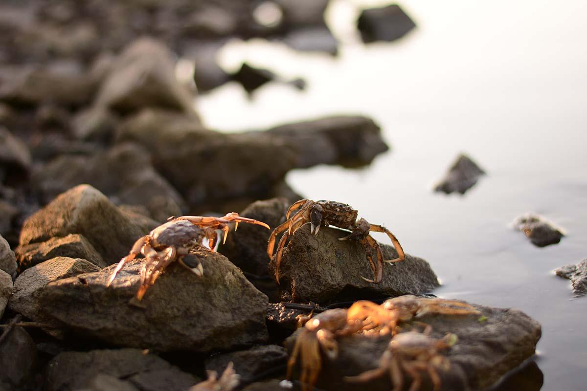twelvefeetmag karpfenangeln am fluss tackle 11 -  - Karpfenangeln am Fluss, Flussangeln auf Karpfen, Flussangeln, Christopher Schneider