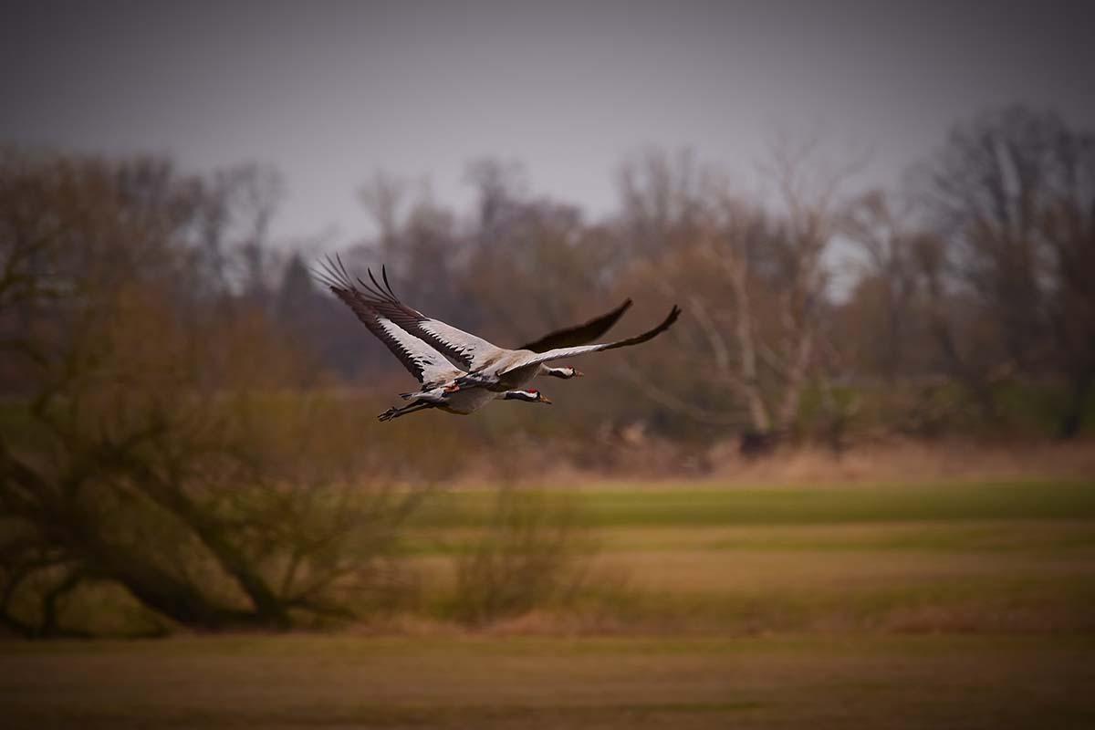 twelvefeetmag karpfenangeln am fluss tackle 14 -  - Karpfenangeln am Fluss, Flussangeln auf Karpfen, Flussangeln, Christopher Schneider