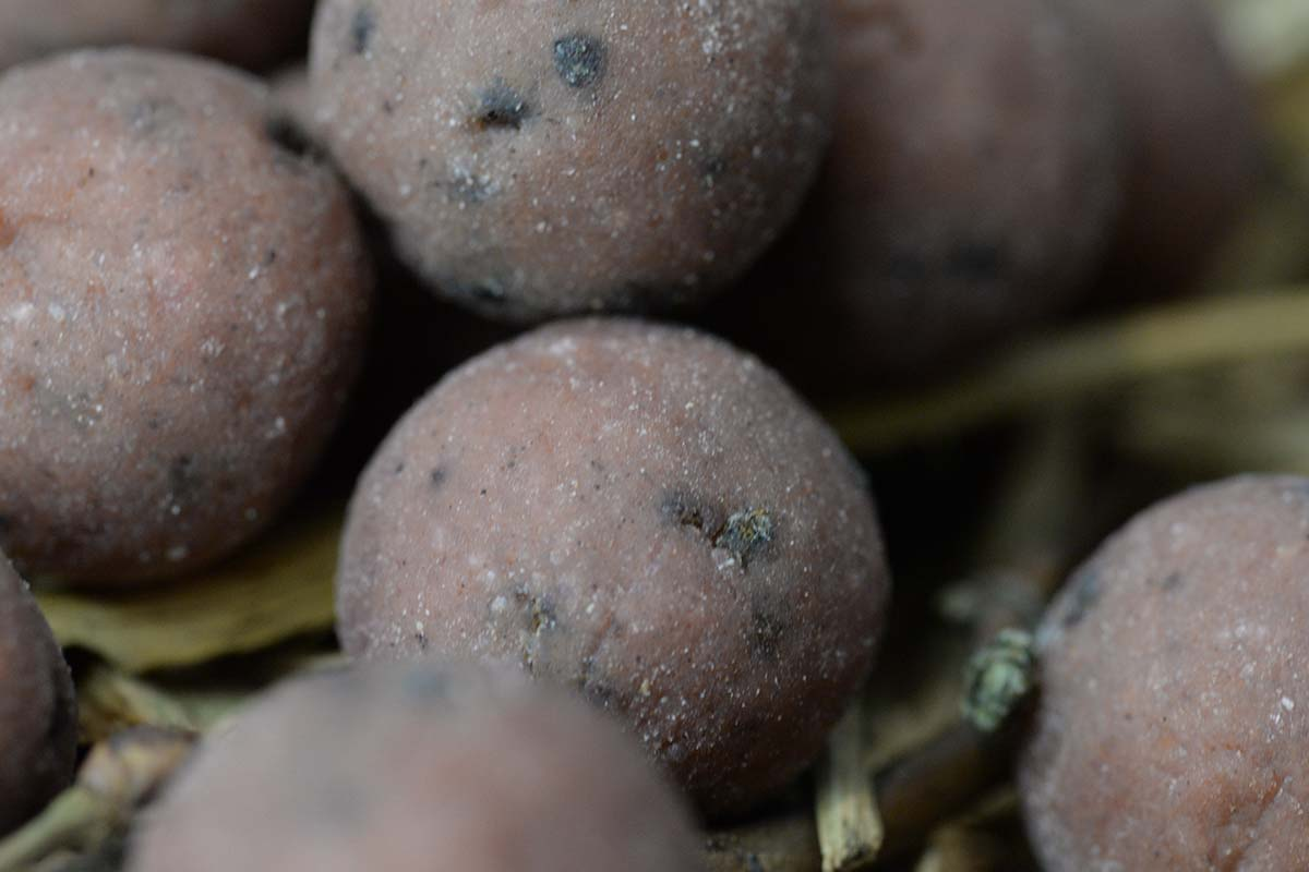 twelvefeetmag radical boilies 7 -  - Smashed Fish Boilie, Radical, Neue Boilies, Beer & BBQ Boilie